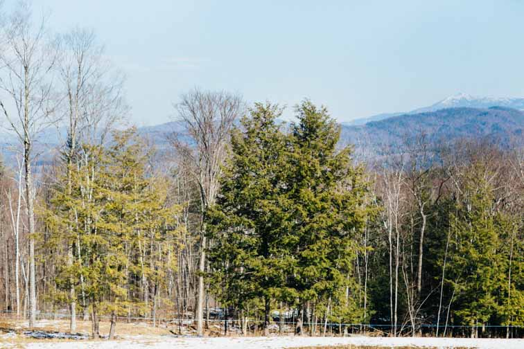 Little Hill Sugarworks, a small family run maple syrup business in Richmond Vermont. Pure Vermont Maple Syrup | From the Trees